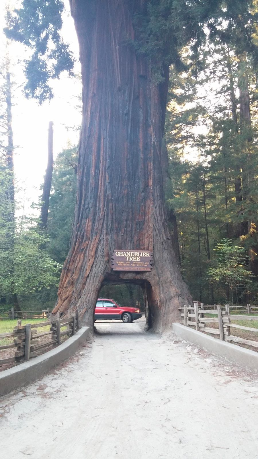 Drive thru redwood trees gaia bros chandelier drive thru tree leggett ca 1 mozeypictures Image collections