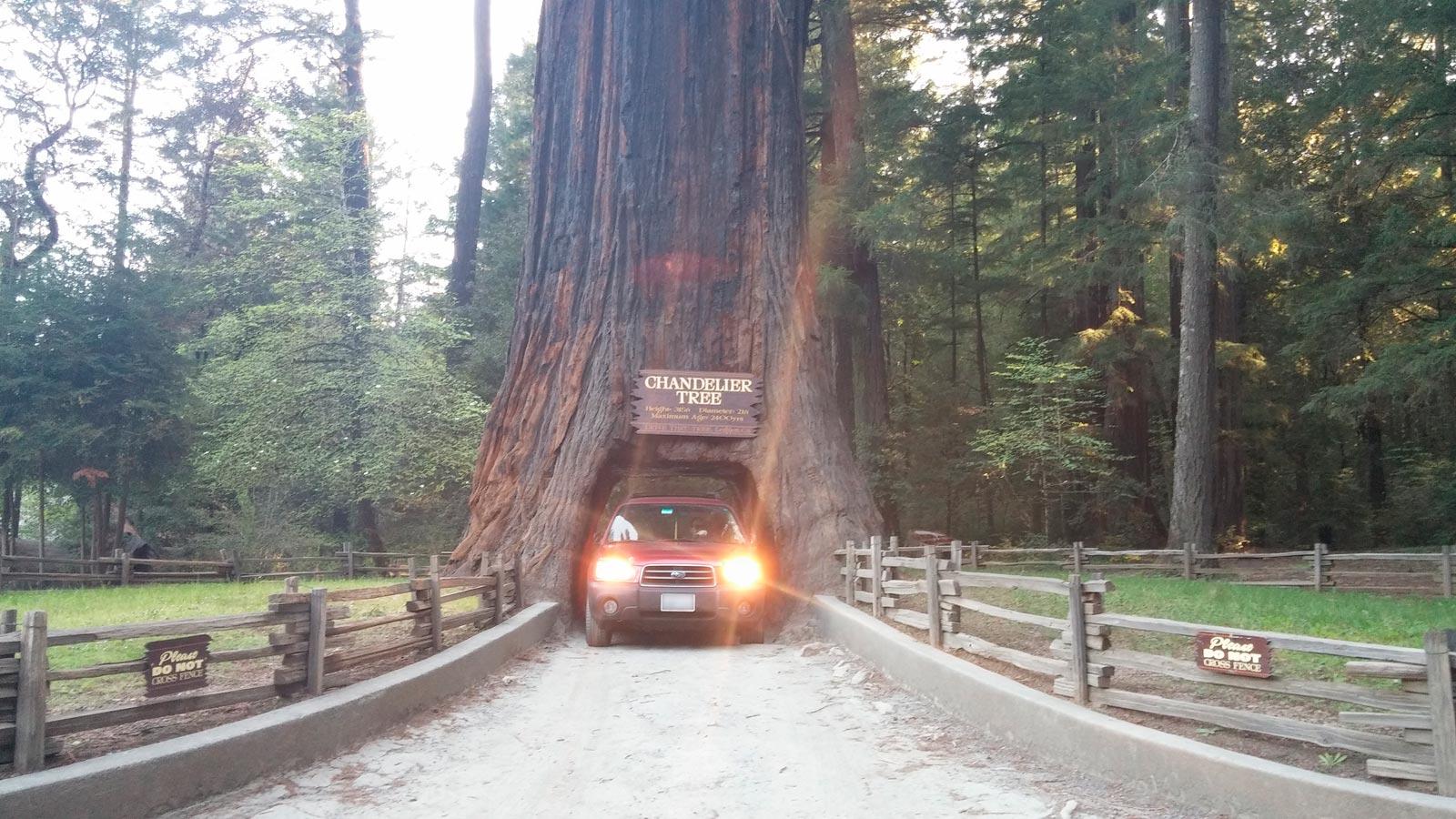 Drive thru redwood trees gaia bros chandelier drive thru tree leggett ca 2 arubaitofo Gallery