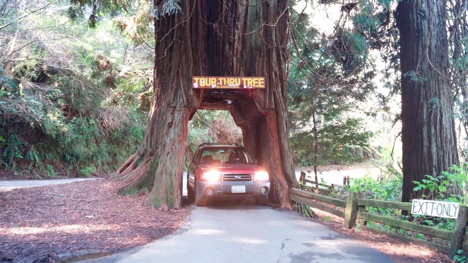 Drive thru redwood trees gaia bros tour thru tree klamath ca 2 arubaitofo Gallery